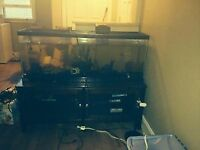 50g aquarium with accessories and fish