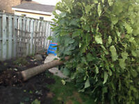 Niagara's Cheapest Tree Services / Tree Removal / Tree Cutting