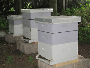 Bee hives, honey, hive hosting, hive sponsor