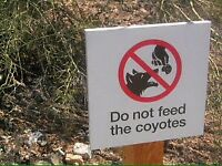 Coyote Problems? I can help.