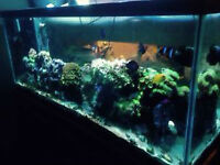 FISH TANK WITH BLACK STAND