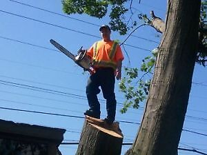 AFFORDABLE TREE REMOVAL & CONTRACTING SERVICE'S Cambridge Kitchener Area image 4