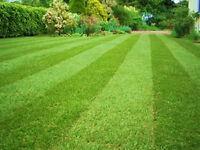 The Friendly Gardener. Garden Maintenance & Manicure. Qualified Professional Gardener