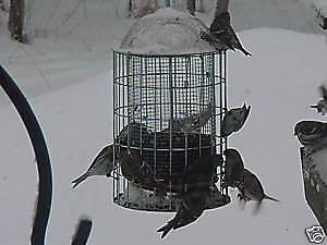 ORIGINAL SQUIRREL PROOF STAINLESS STEEL WILD BIRD THISTLE FEEDER SINCE 1992