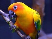 Parrot Hand-reared and Talking