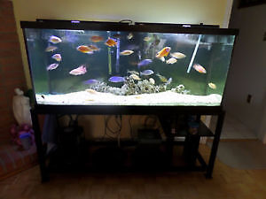 125 GALLON HAGAN AQUARIUM WITH TUBULAR STAND
