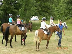Riding Lessons. Beginner to advanced welcome. Spaces available