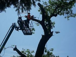 AFFORDABLE TREE REMOVAL & CONTRACTING SERVICE'S Cambridge Kitchener Area image 6