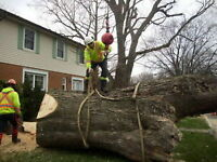 NATURE'S CHOICE TREE SERVICES - FULLY INSURED  - CERTIFIED