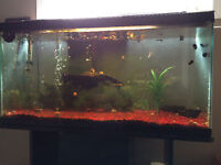 35 Gallon fish tank with lots of accessories