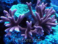 Coral frags, live rocks and fish