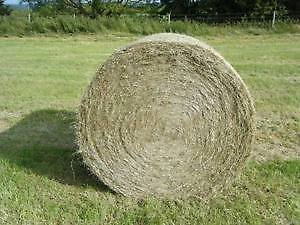 Hay bales for sale ,Excellent for horses