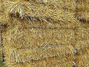 Clean Wheat Straw For Sale