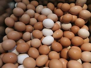 EGGS, Omega 3 Farm Fresh, Free Run Eggs Kitchener / Waterloo Kitchener Area image 2