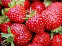 Strawberries 4.50 a quart OR 3 for 12.00