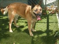 "Adult Female Dog: ""Amber"""