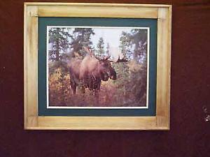 Moose In The Bush Art Framed Print