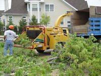 ****Tree removal best price.****