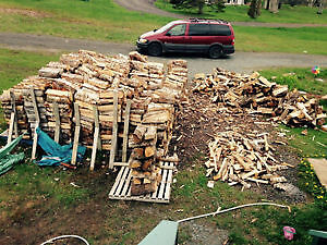 CUT YOUR OWN FIREWOOD/SEASONED/HARD WOODS AND BIRCH AND SPRUCE