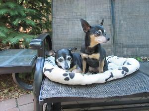 Peanut and Lily!  Older girls looking for love : )