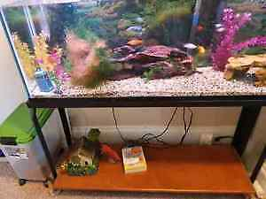 Complete 55 Gallon fish tank with fish! London Ontario image 1