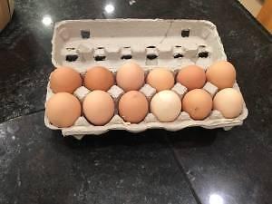 Brown free range chicken eggs