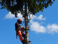 15% Discount on Tree Removals- Fall/Winter Bookings!