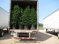 Labour to Unload Evergreens; Shrubs & Trees