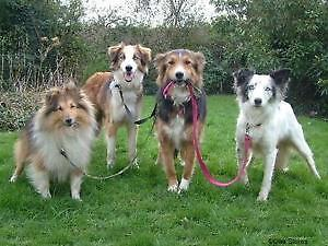 Good Dirty Fun - Dog Walking and In-home Pet Visits