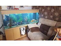 6 foot 800l fish tank
