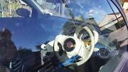 2008 Fiat 500 Hatchback Pasadena Mitcham Area Preview