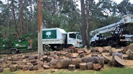 Ecologic Tree Service