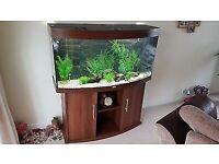 Jewell 360 fish tank