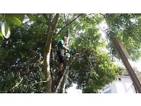 Tree Surgeons/All Types of Trees