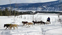 Seeking: Sled Dog handler/mushing position (Kootenays)