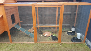 Chickens for sale Heidelberg Heights Banyule Area Preview