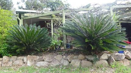 Plants In Brisbane Region, QLD | Home U0026 Garden | Gumtree Australia Free  Local Classifieds