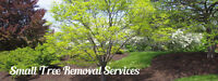 Small Tree Removal Service Small Prices GTA