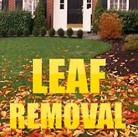 Fall clean up leaves and more 25$ also snow removal