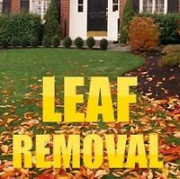 Leaf cleanups  ( Book Now )