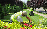 Commercial Landscape and Maintenance / Residential