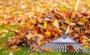 Spring or Summer Clean Up and Handy Man Jobs