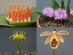 unusual-plants