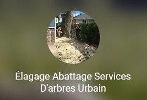 Elagage arbre services dans ville de qu bec petites for Prix de l elagage d un arbre