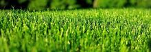 • LAWNMOWING & GARDENING • Call or text 0 for a FREE quote! Clarkson Wanneroo Area Preview