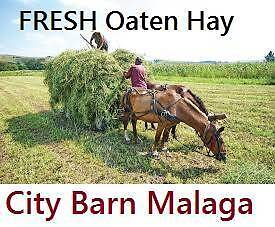 FRESH OATEN HAY: BAGGED OR BALES Malaga Swan Area Preview