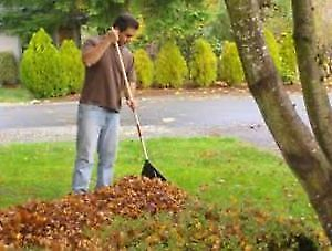 No job too big or too small Fall cleanup!