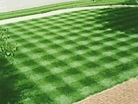 Evergreen lawn mowing