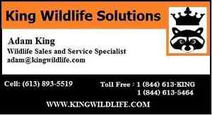 King Wildlife Solutions