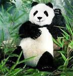 Sandy Panda s Den